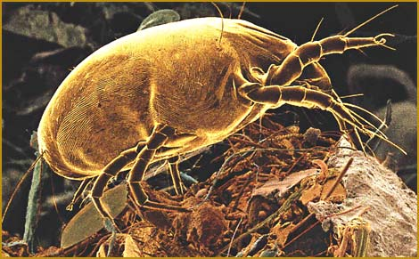 how to clean dust mites from couch